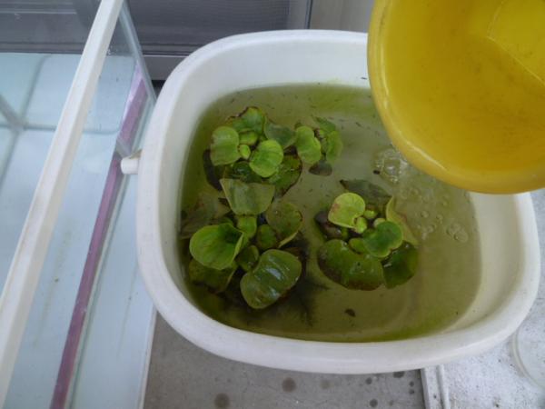 稚魚用水槽
